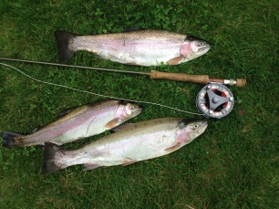 The winning bag , over 8lb of excellent Rainbows.