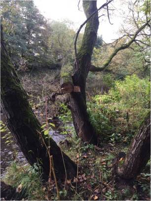 A part felled bough left in dangerous condition