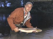 A lovely Salmon slips back into the river